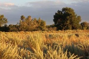 Landscape USFWS Susan Drobniak