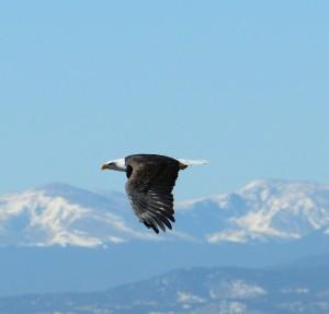 eagle flying Rich Keen