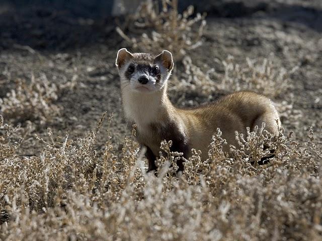 Why Wildlife Refuges Matter